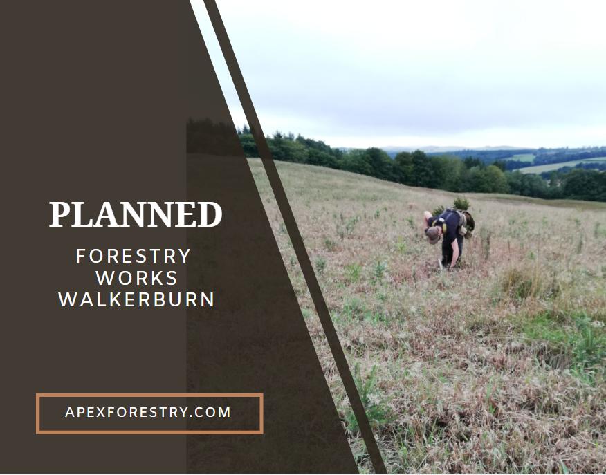 Planned forestry works in Walkerburn