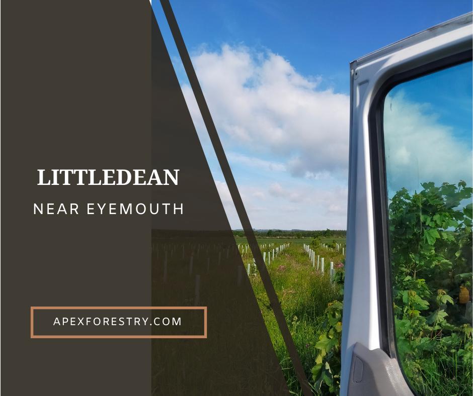 Littledean near Eyemouth